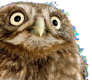 Close up of face of an owl