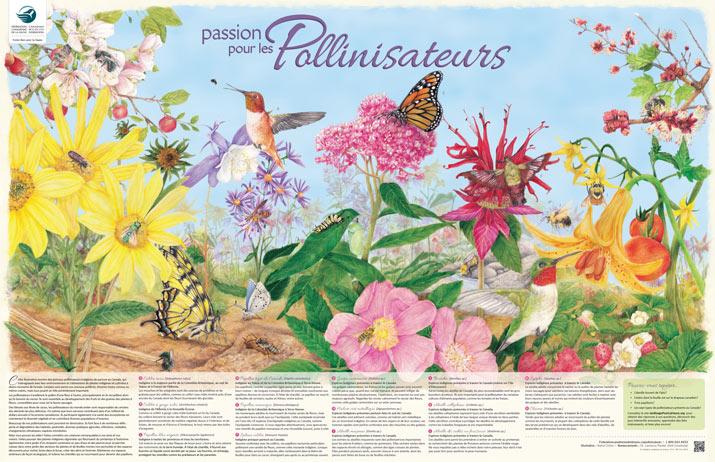 passion pour les pollinisateurs