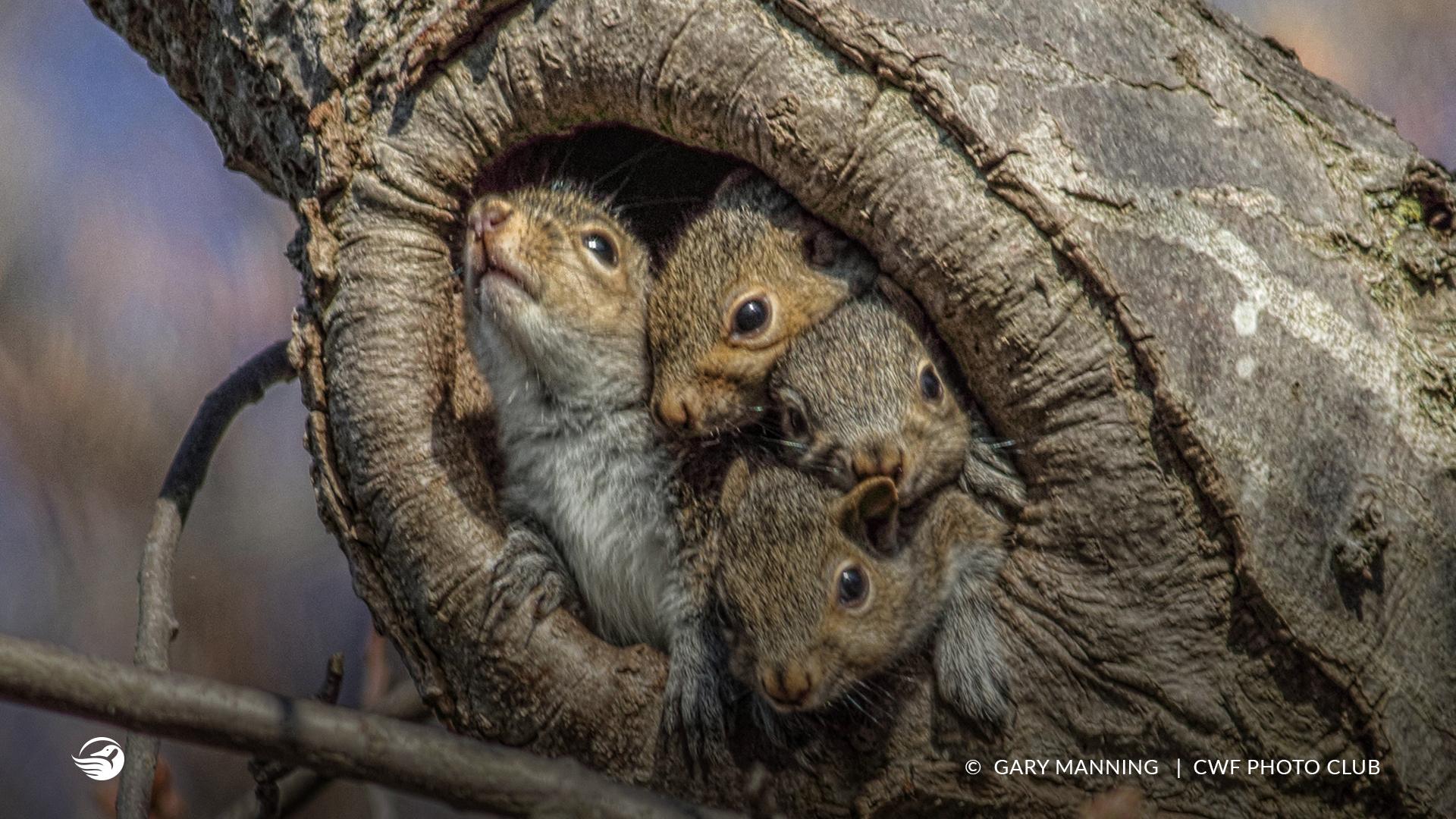 squirrel family tree