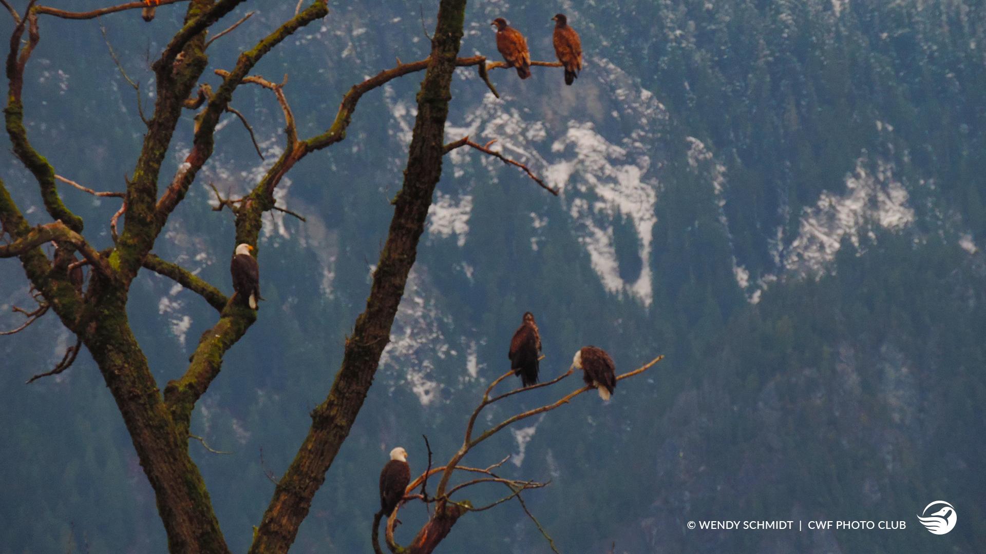oiseau sur arbres