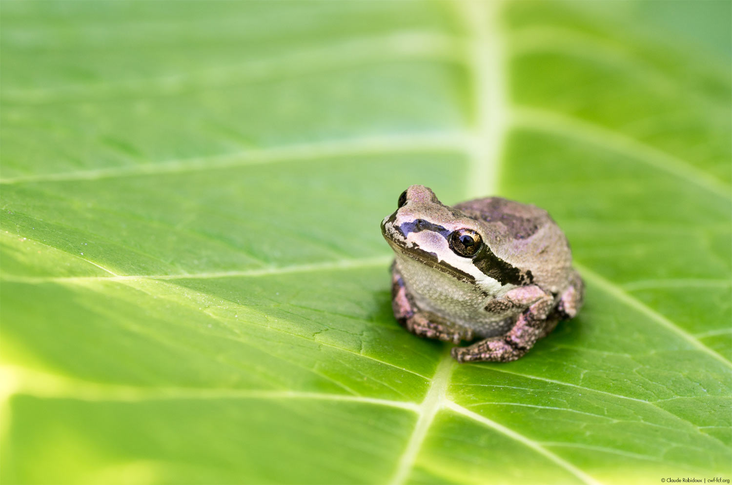 small frog on leaf
