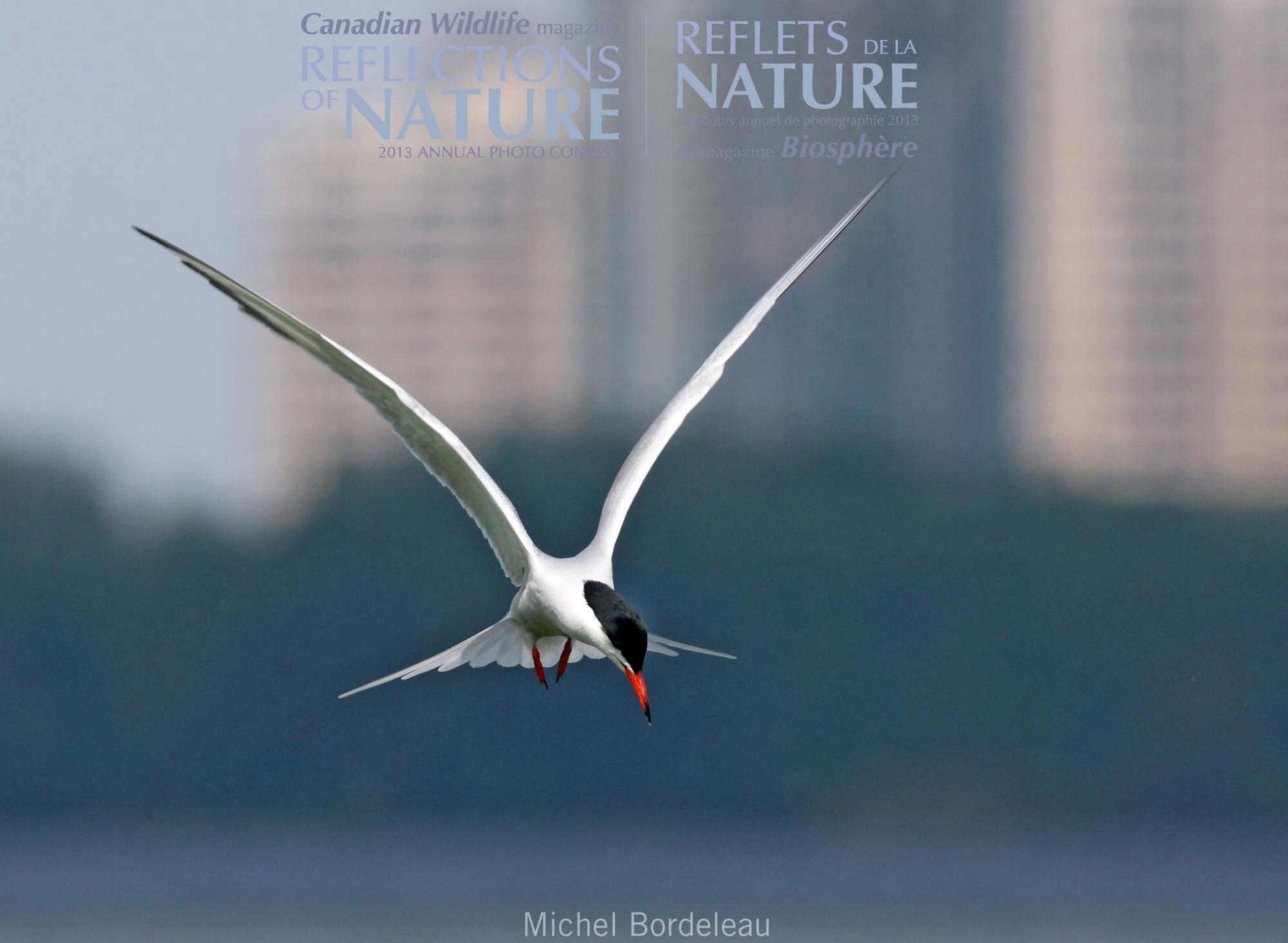 Professional | Urban Wildlife | Concours professionnel | Faune urbaine