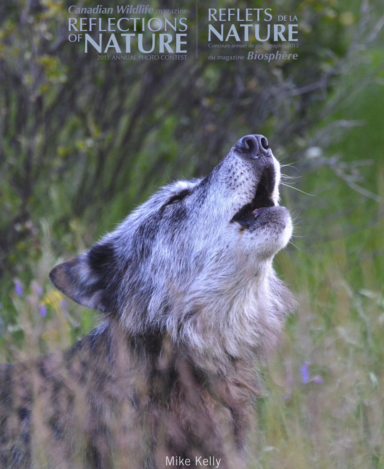Amateur | Fauna | Concours amateur  | Faune