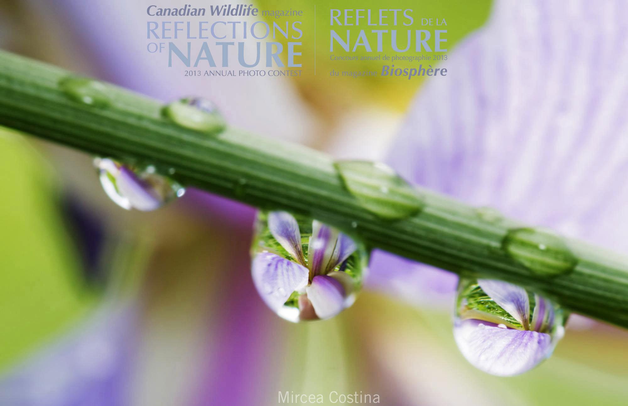 Professional | Flora | Concours professionnel | Flore