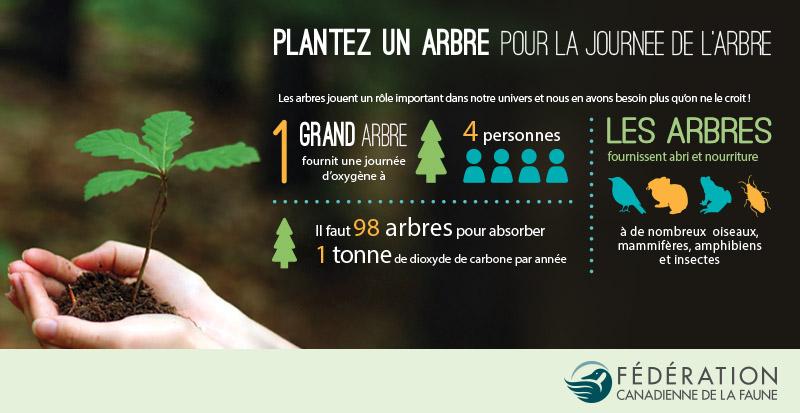 Tree infographic