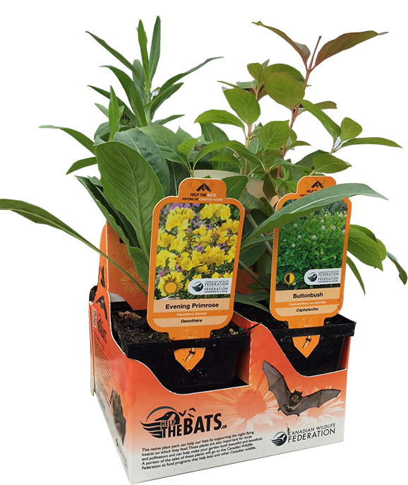 bat plant packs