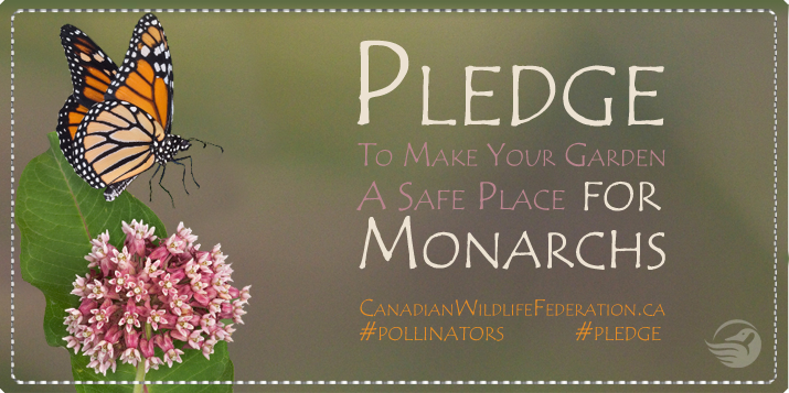Pledge to plant a monarch friendly garden banner