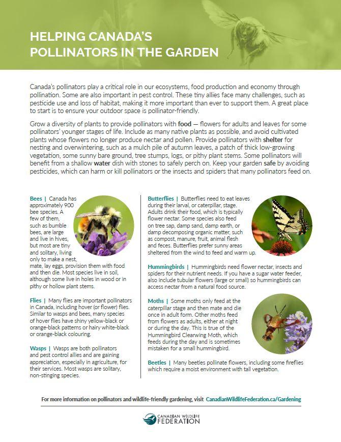pollinator handout cover