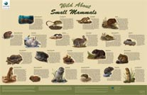 wild about small mammals 206