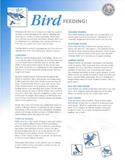 bird feeding handout