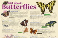 wild about butterflies 206