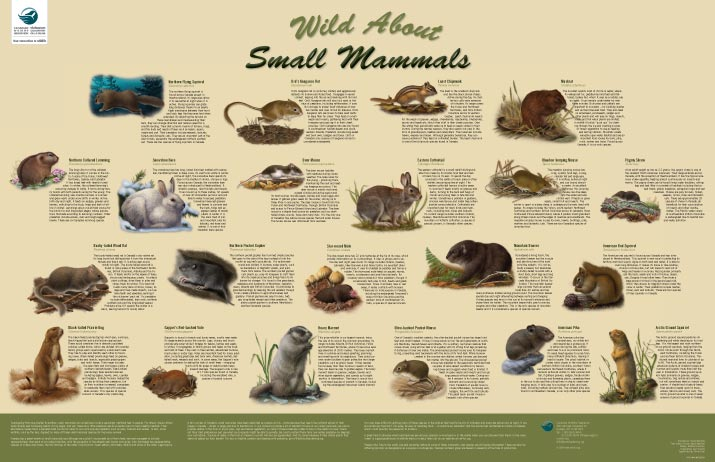 wild about small mammals