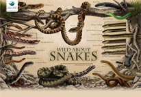 wild about snakes poster 206