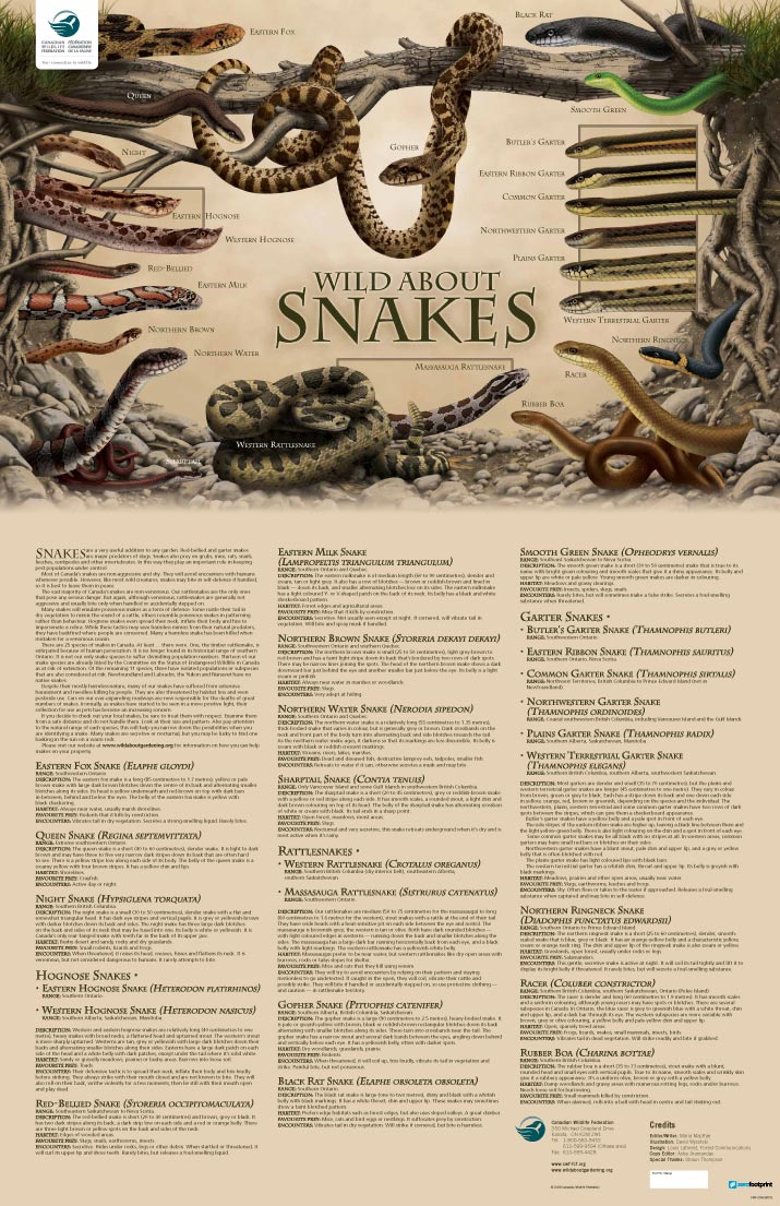 wild about snakes poster