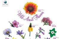 wild about flowers 206