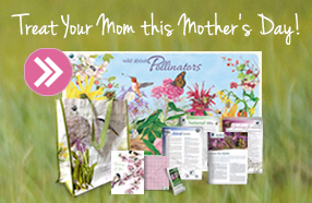 mothers day bundle promo box