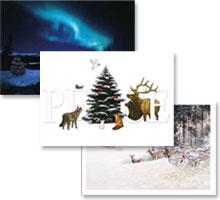 CWF Christmas Cards 2008