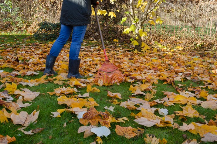 Raking leaves in autumn