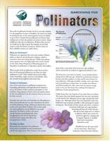 Pollinators Handout