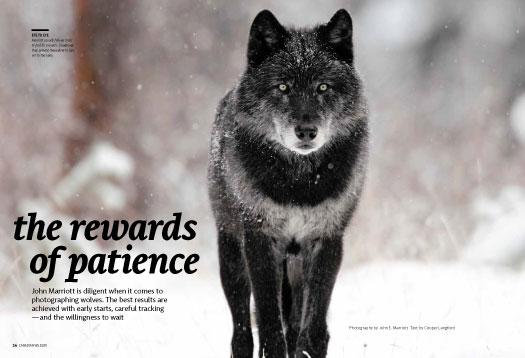 The Rewards of Patience 525