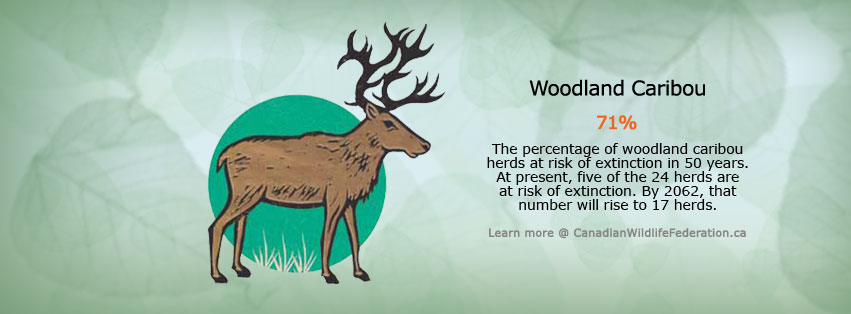 Facebook cover of caribou species statistics