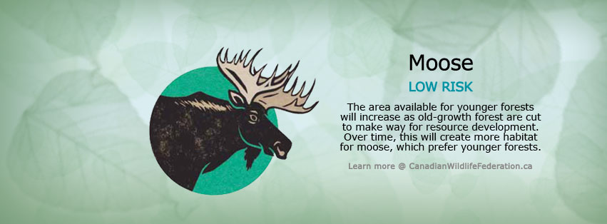 Facebook cover of moose species statistics