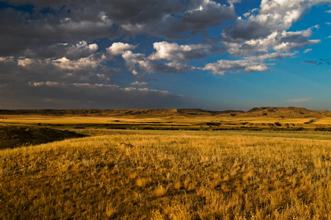 Grasslands 480