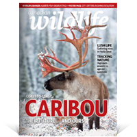 Canadian Wildlife magazine cover