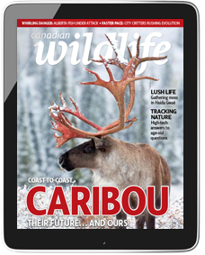 Tablet showing Canadian Wildlife Magazine cover