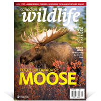 English magazine cover for Canadian Wildlife