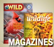 store magazines