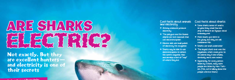 Are sharks electric banner