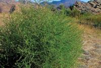 bush sm