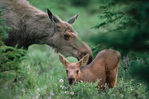 Canadian wilderness animals