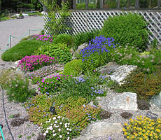 Colourful alpines adorn the Botanical Garden's Rock Garden