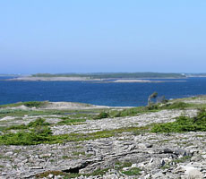 Limestone barrens at Bird Cove