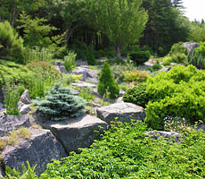 Native plants of all shapes and sized grow in the Rock Garden at Memorial University