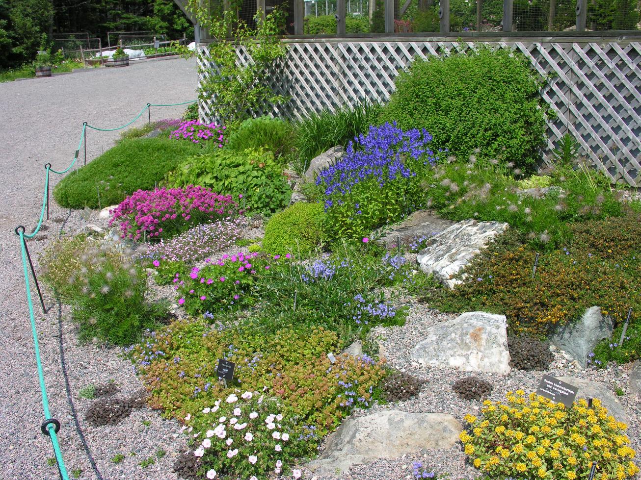 colourful-alpines-adorn-the-botanicalgardens-rock-garden
