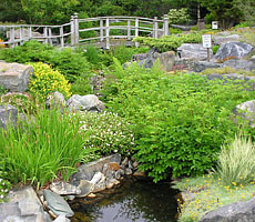 The Rock Garden at MUN's Botanical Garden has many scenic views