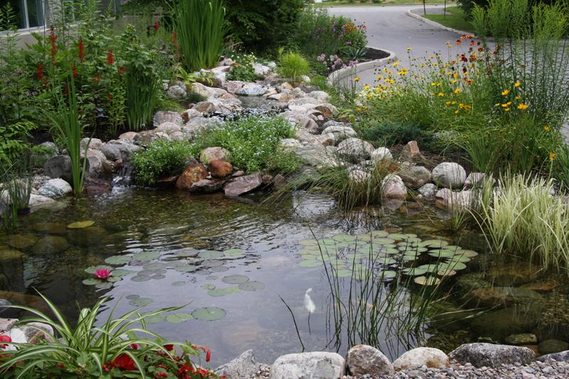 Canadian Wildlife Federation Water In The Garden