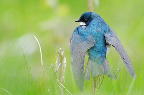 header blue bird 480