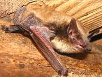 bat on wood