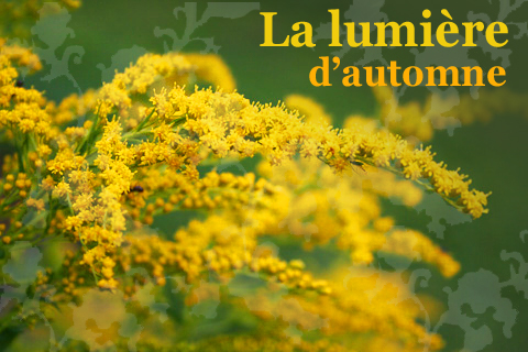 La lumiere d'autumne