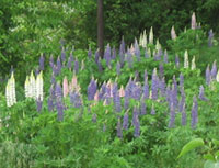 A Nova Scotia Garden