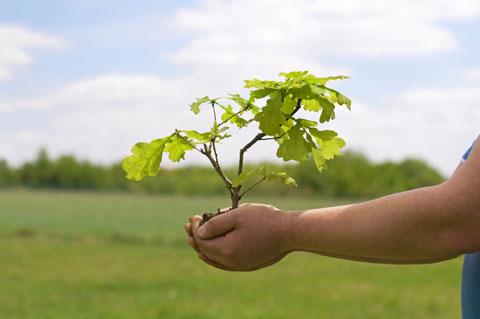 Wymagania jakościowe drzew i krzewów iglastych