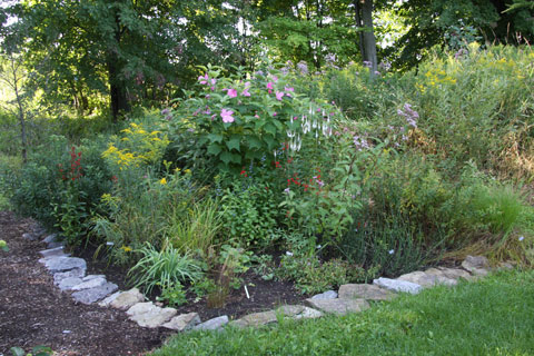 Creating a native garden