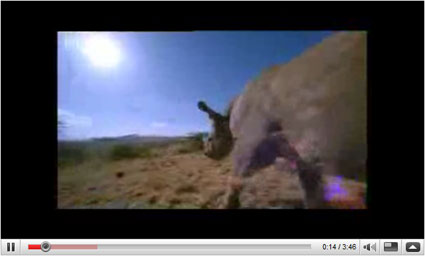 YouTube screen capture of baby Rhino
