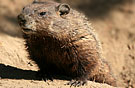 2groundhog135