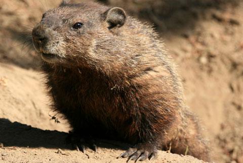 2groundhog480