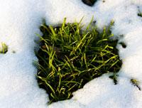 Photo Contest Theme - Spring-Melt